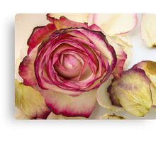 White pink roses 2 Canvas Print