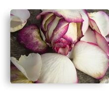 White pink roses 4 Canvas Print
