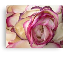 White pink roses 6 Canvas Print