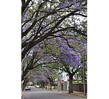 Jacaranda Streetscape Photographic Print
