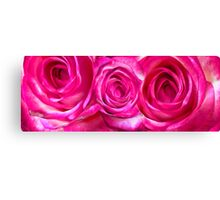 White pink roses 7 Canvas Print