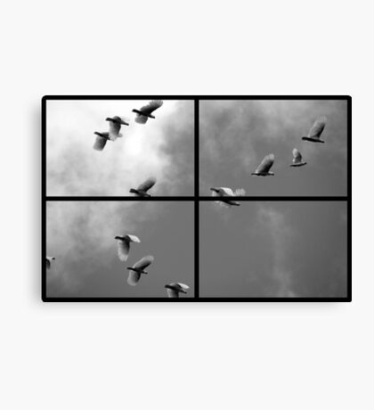 Fly By Canvas Print