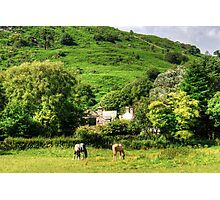 Horses in Eskdale Photographic Print