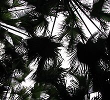 Fronds by Glenn Browning