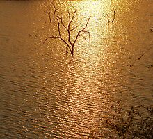 """""""SILHOUETTES IN GOLD"""" SETS OF TWO   by Magriet Meintjes"""