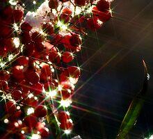 Berry Delightful by Lolabud