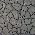 Dried Cracks in the Mud by hallucingenic