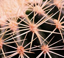 Prickles by Jo Nijenhuis