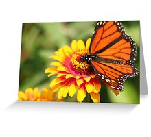 Monarch Beauty: Wings Spread Greeting Card