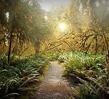 Hall of Mosses. by Jennifer Bishop
