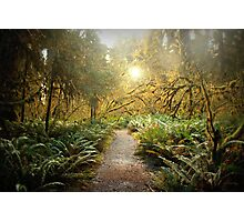 Hall of Mosses. Photographic Print