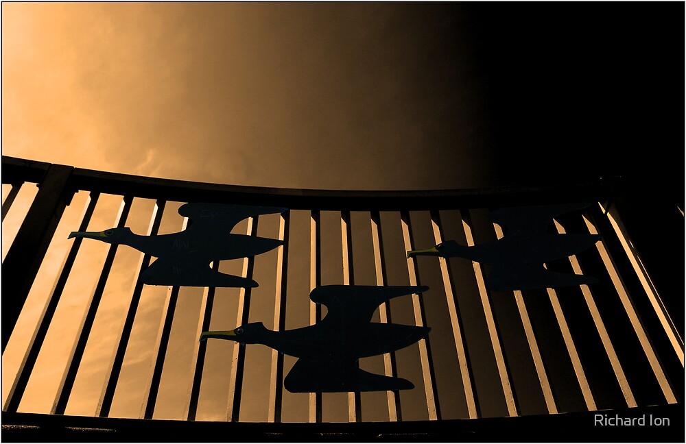 Bird Fence - Cormorants in Flight by Richard Ion