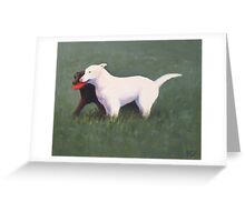 labrador retrievers with red frisbee Greeting Card