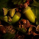 Acorns by Gazart