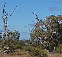 Marshy Bush Land  by Robert Abraham