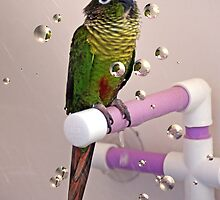 Sidney in the shower by Kimberly Palmer