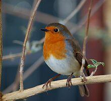 Robin Swing by ApeArt