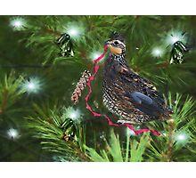 Holiday Ribbon Photographic Print