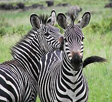 Striped companions by Kirk Hart