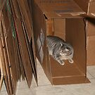 Kitty in a Box by Virginia N. Fred