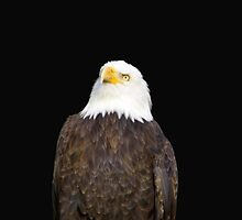 The Look Of Eagles by WildestArt