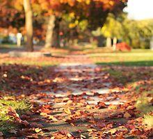 Autumn Path in Orange by Austin Walsh