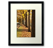 Yellow Trees in a Line Framed Print