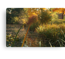 Orange Reed Canvas Print