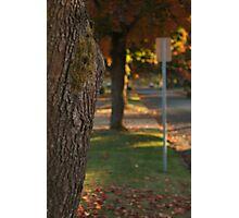 Tree Sign Street Photographic Print