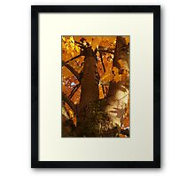 Looking up a Tree in Orange Framed Print