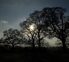 Four Trees by Phototaffic