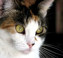 Pretty in Calico by Chris Gudger