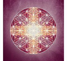 flower of life magenta Photographic Print