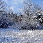 Pennsylvania Ice Storm by clizzio