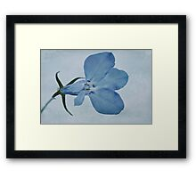 Blue Lobelia Macro Framed Print