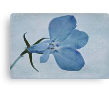 Blue Lobelia Macro Canvas Print