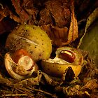 Three Conkers by Gazart