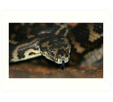 South-West Carpet Python Art Print