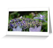 Shooting Star Hydrangea Greeting Card