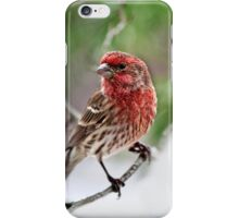 Christmas Finch iPhone Case/Skin