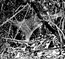 Funnel Web by FOTOX