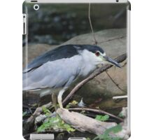 Black-crowned Night Heron iPad Case/Skin