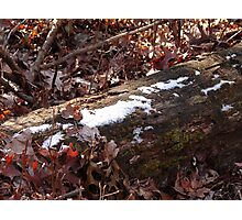 Dusting of snow... Photographic Print