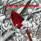 Merry Christmas Cardinal by mnkreations
