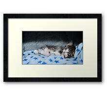 Cool For Kittens Framed Print