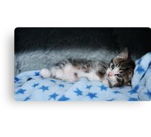 Cool For Kittens Canvas Print