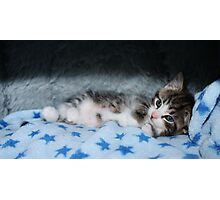 Cool For Kittens Photographic Print