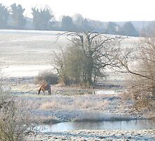 Frosty March Morning by Tony Reed