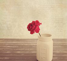 Red Carnation by KJ DeWaal