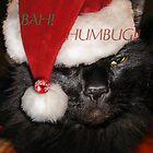 Bah Humbug! by Rebecca Bryson